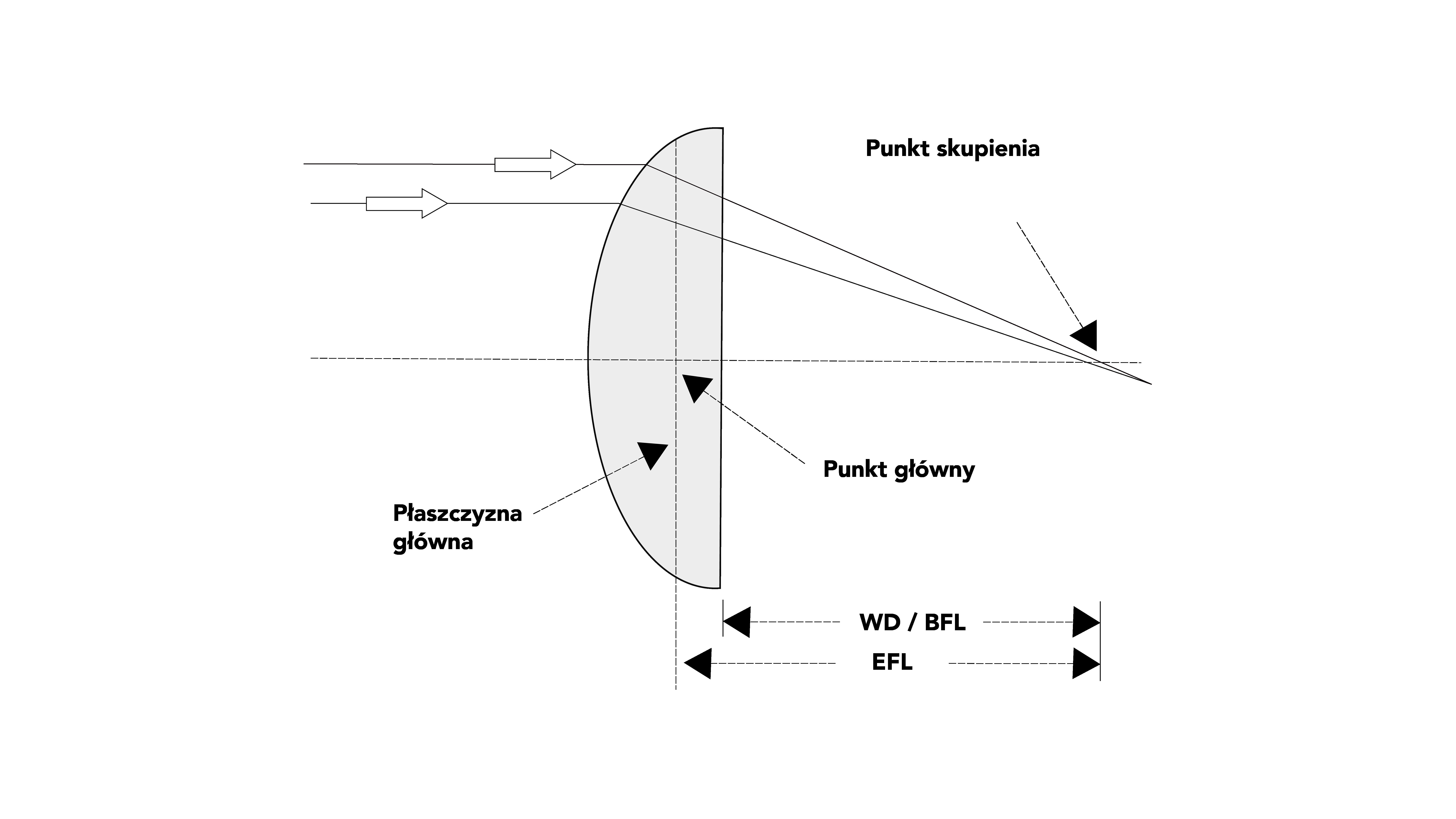 Cechy soczewki
